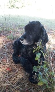 Bear under the pine canopy