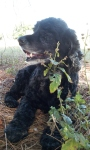 Remembering Bear