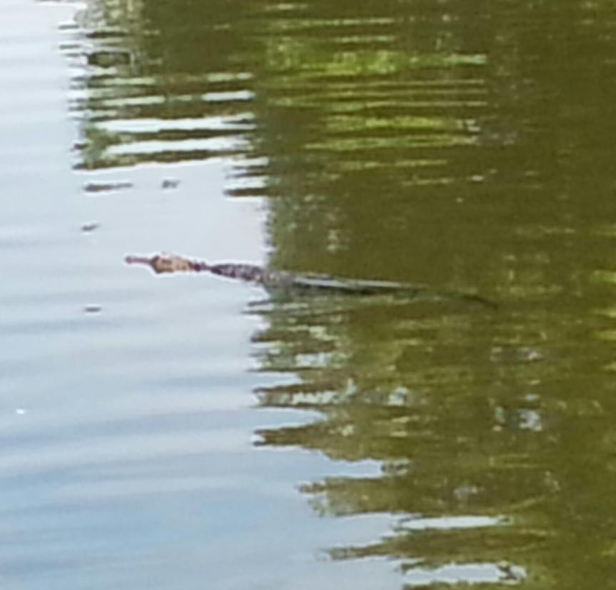 Tick Tock enjoying a morning swim.