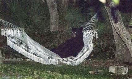 The Breaking News Bear