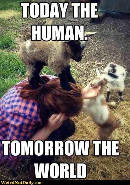 Happy Year of the Goat! Love Always,Von