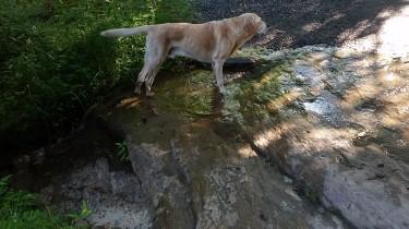 Periwinkle hitting the Labrador pose