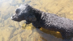 Bobby getting his water dog on